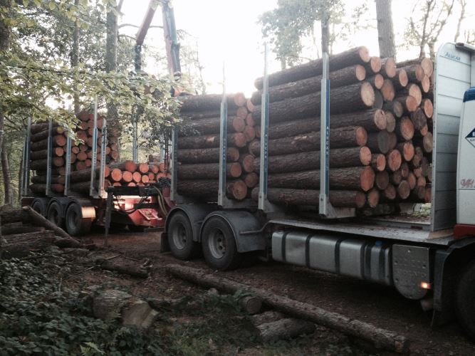 larch fencing timber loaded